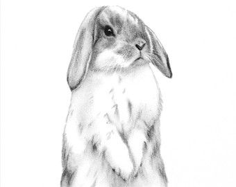 Bunny lop. Bunnies clipart mini transparent