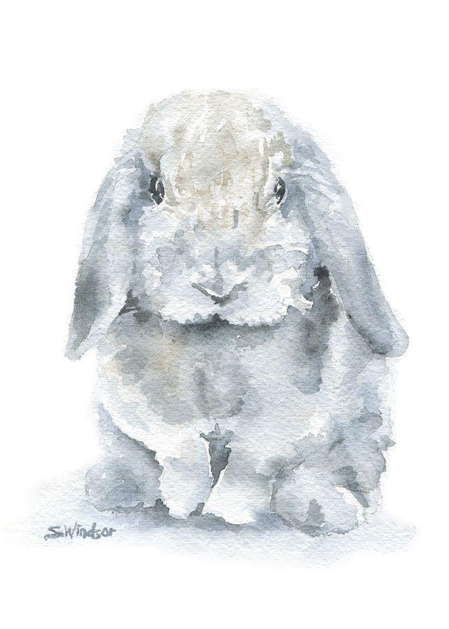 best cottontails images. Bunnies clipart mini lop
