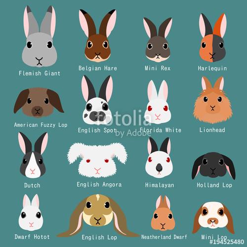 Bunnies clipart mini lop. Rabbits breeds set stock