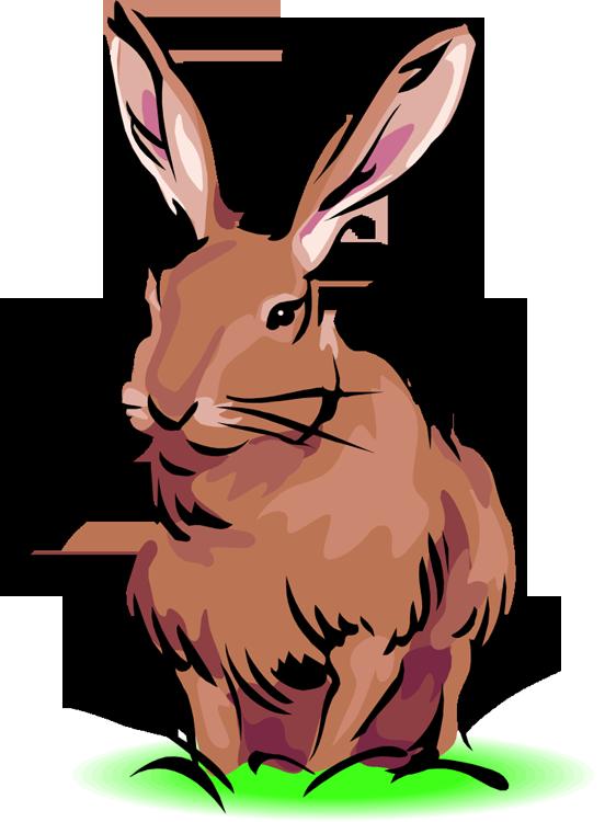 Free rabbit . Clipart bunny mini lop