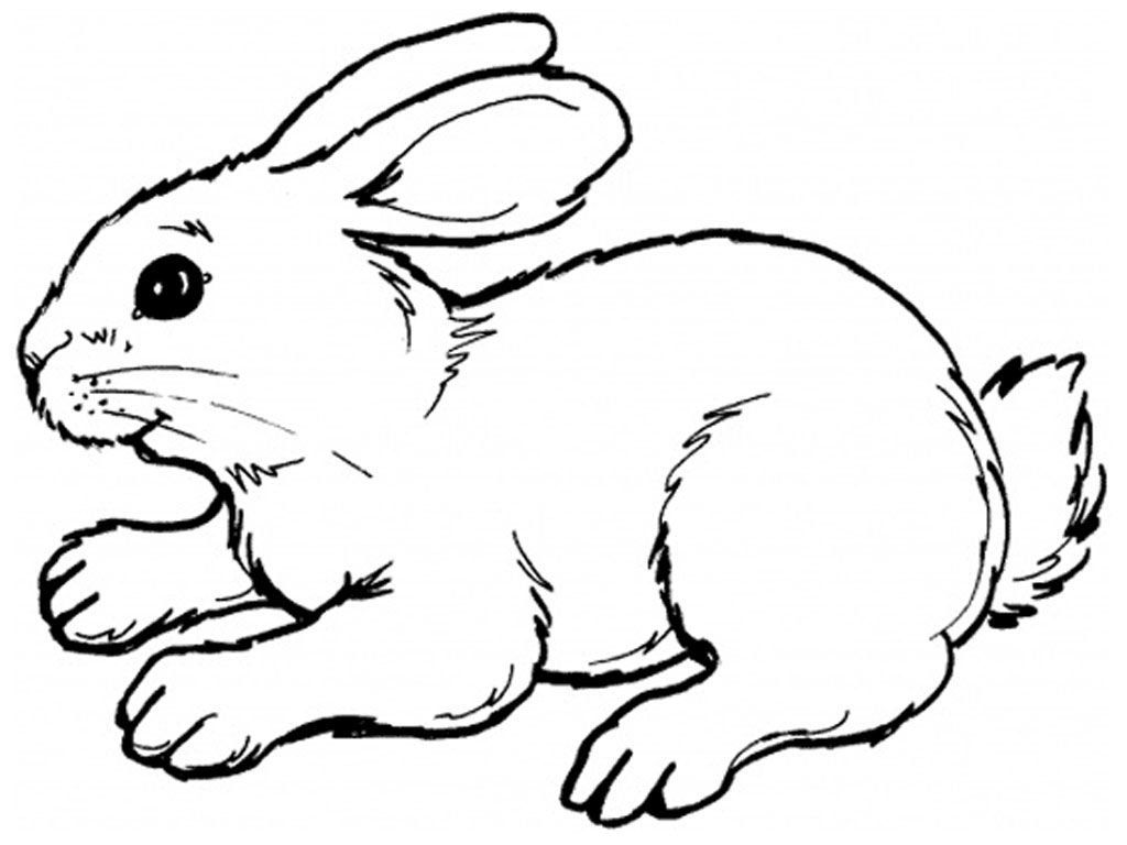 Clipart rabbit coloring page. Drawing a bunny of