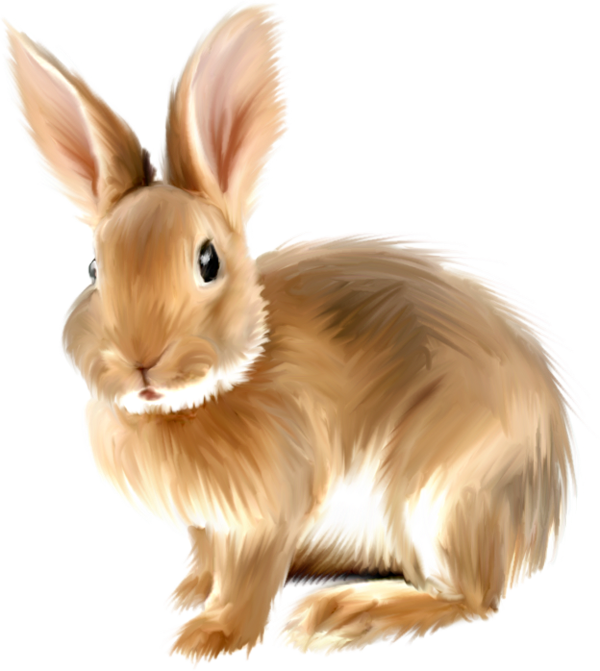 Free clipart rabbit. Painted bunny png gallery