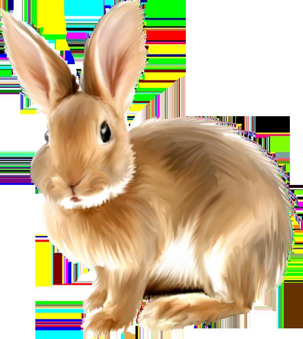 Baby clip art funmozar. Clipart bunny forest