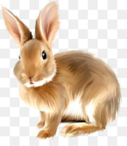 Png and psd free. Bunny clipart colored