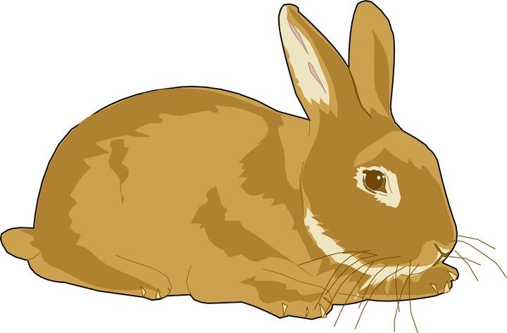 Clipartix . Pets clipart bunny
