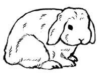 collection of drawing. Clipart bunny holland lop