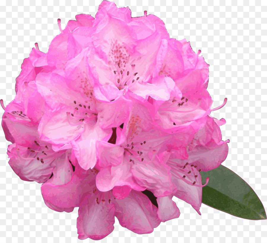 Rhododendron flower drawing at. Bush clipart azalea