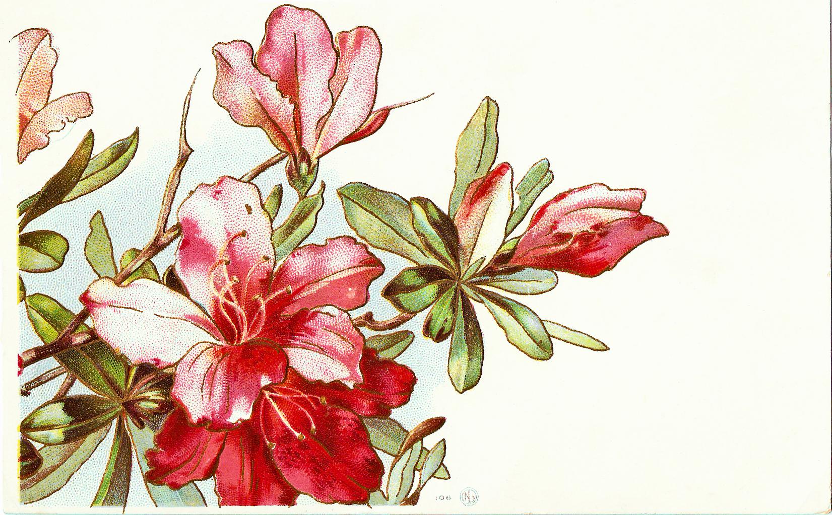 Catnipstudiocollage free vintage clip. Bush clipart azalea