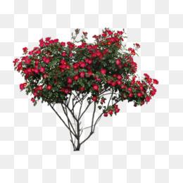 Bush clipart azalea. Shrubs png vectors psd