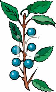 Bush clipart berry. Blueberry royalty free picture