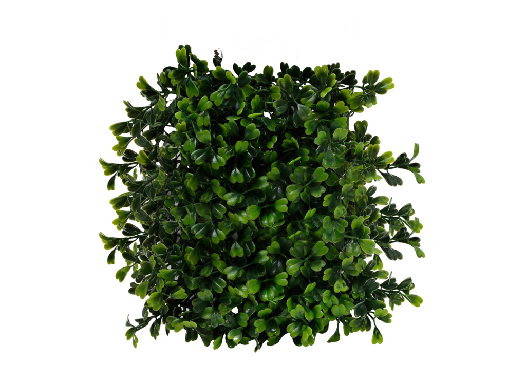Bushes png images free. Planting clipart top view