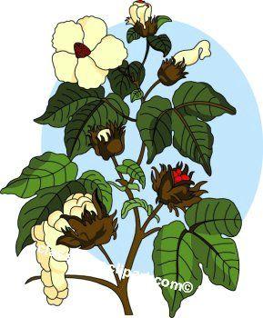 Plant clip art mvl. Cotton clipart bush
