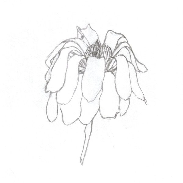 Bush clipart drawing. Dead flower how to