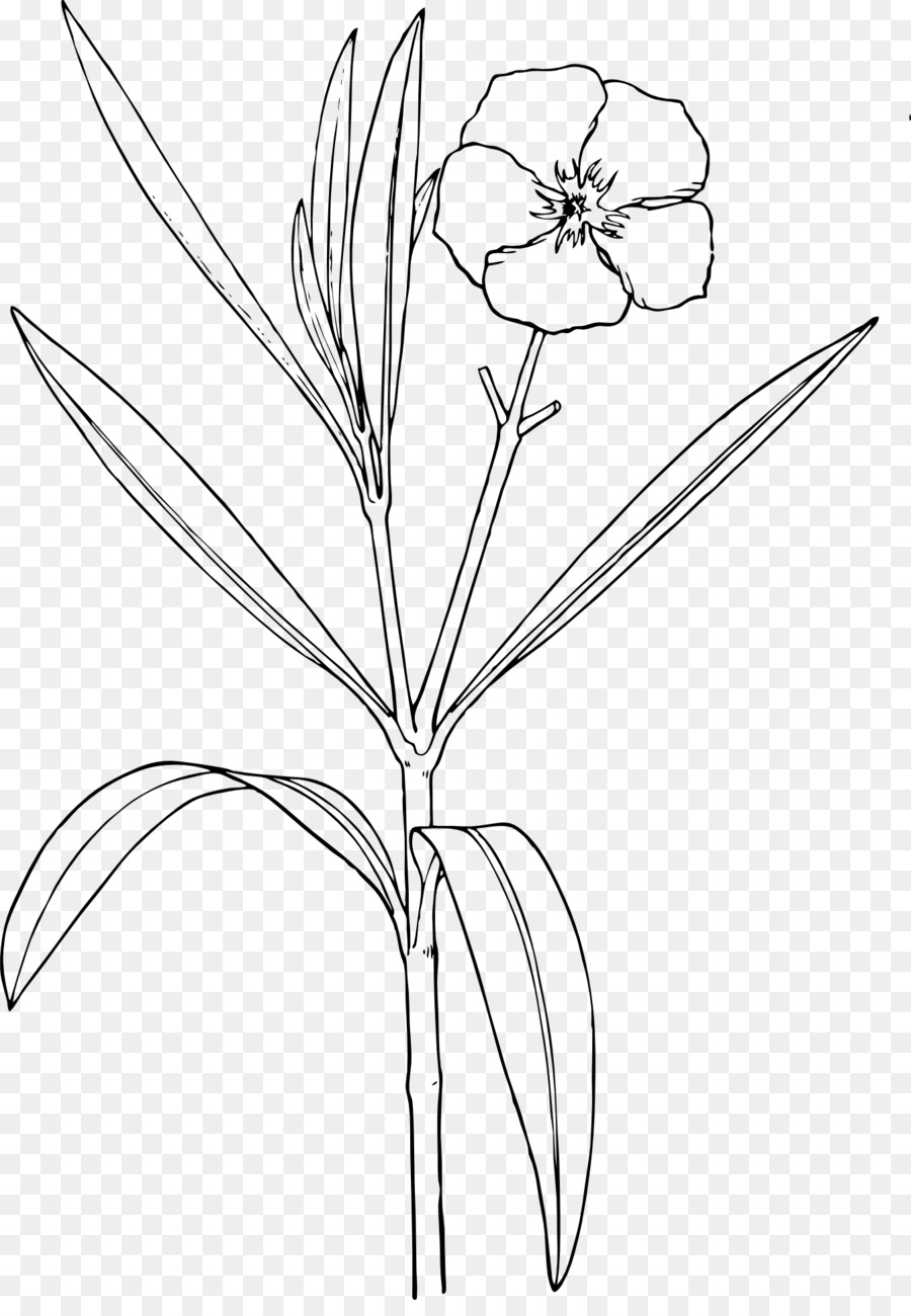 Oleander nature and design. Bush clipart drawing