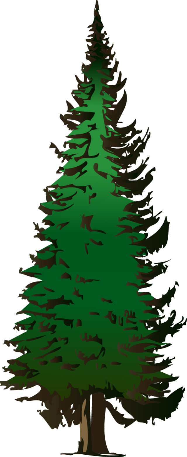 Clipart trees evergreen. Web design development and