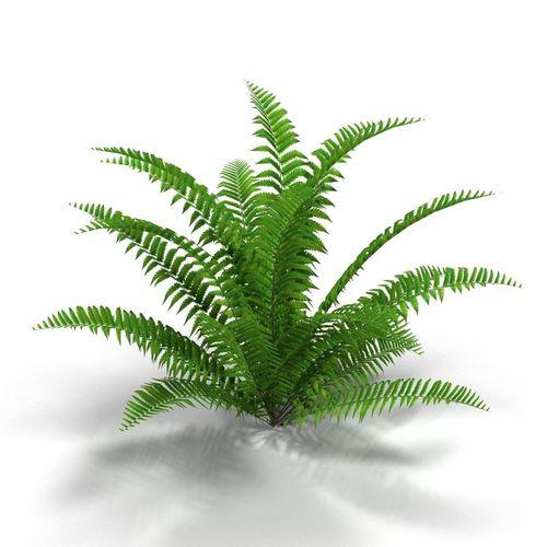 d model bush. Bushes clipart fern