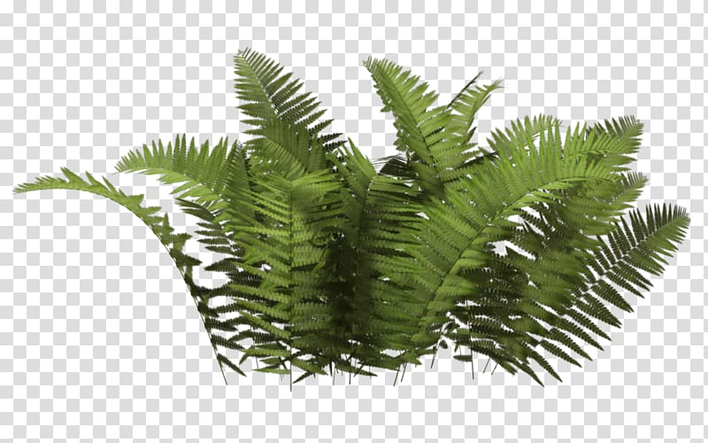 Bushes clipart fern. Plant tree bush close