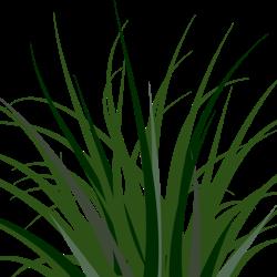 Bush clipart flax. Annual grasses ymker greenhouse
