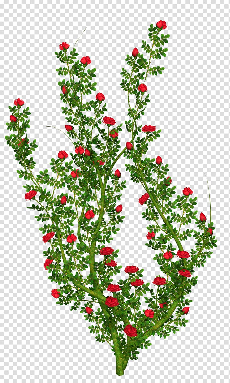 Bushes clipart flower. Rose shrub bush transparent