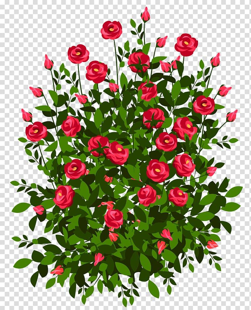 Bush roses drawing transparent. Rose clipart shrub
