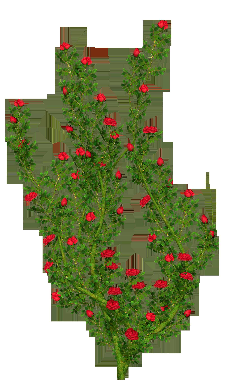 Rosebush png picture gallery. Bush clipart flower