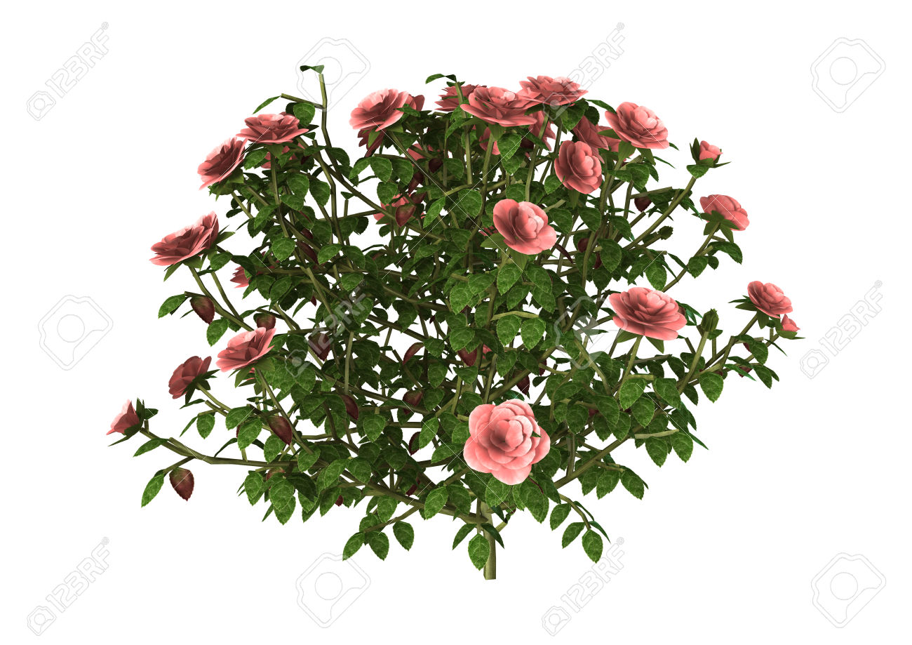 d illustration pink. Bush clipart flower