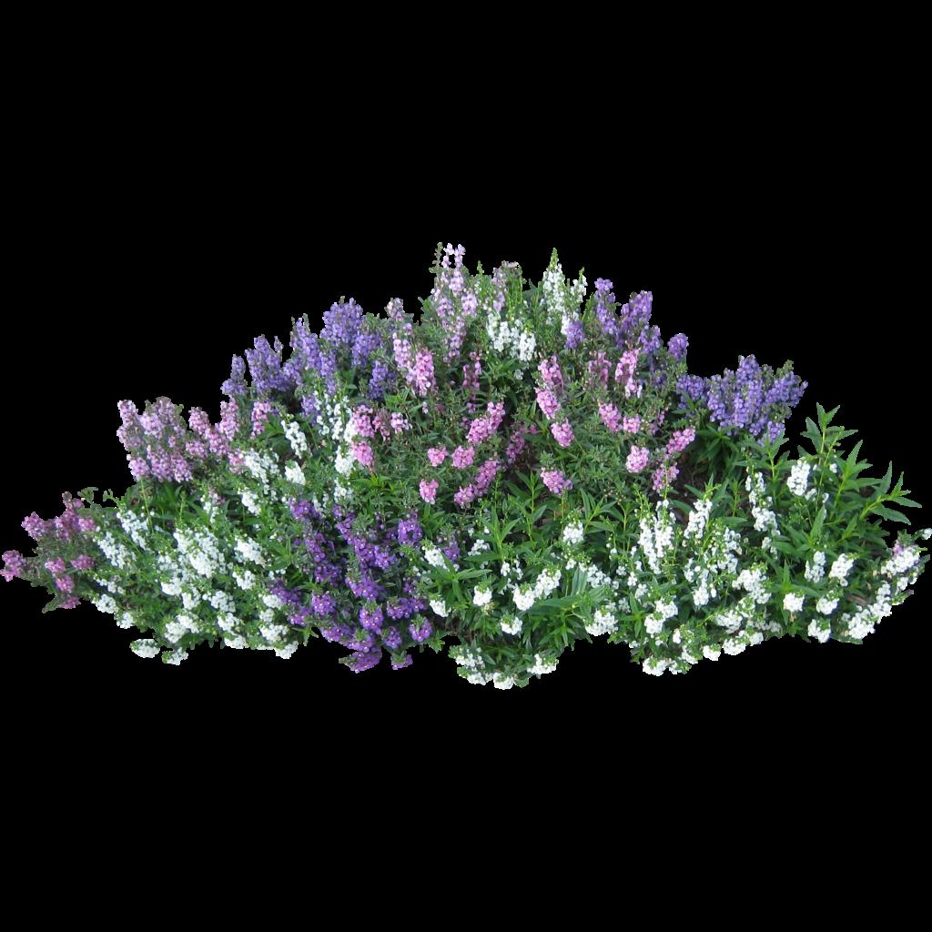 Clipart grass shrub. Flower garden clip art