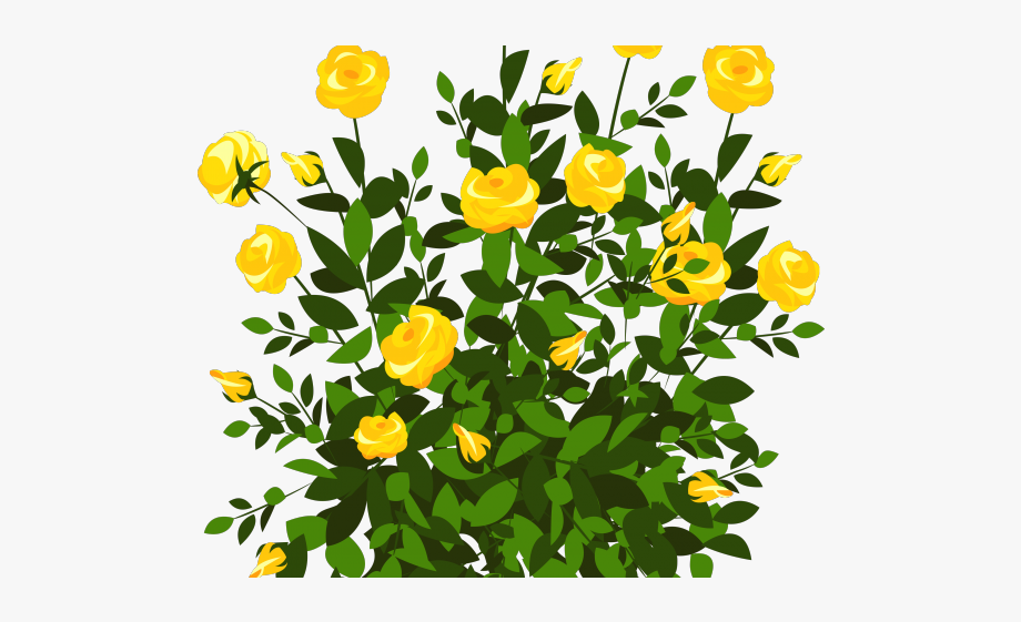 Bush colorful with flowers. Rose clipart shrub