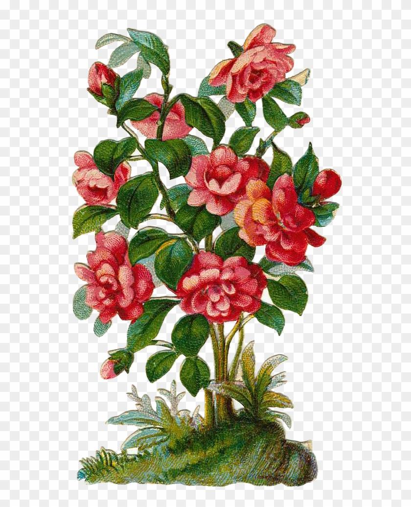 Clipart roses shrub. Image library download bush
