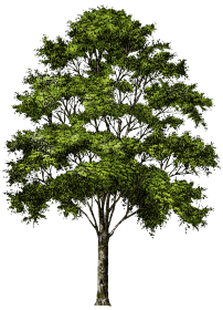 Png gallery images with. Bush clipart forest