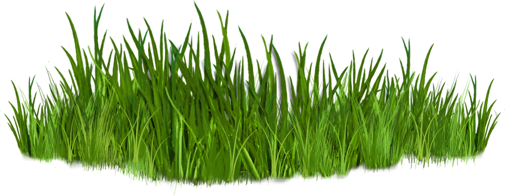 Clipart grass safari. Lawn forest free collection
