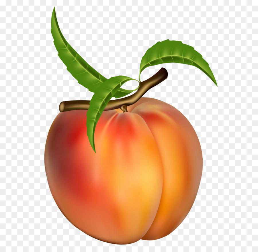 Bush clipart fruit. Peach apricot clip art