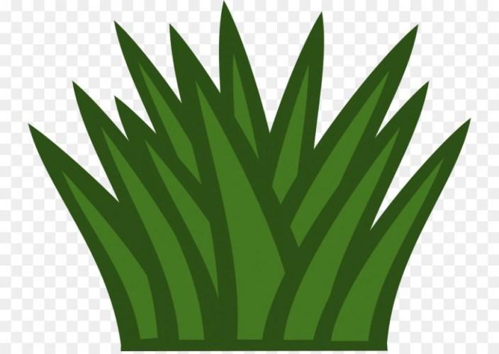 Shrub free content clip. Bushes clipart green bush