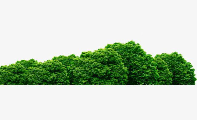 Bush clipart green bush. A png backgrounds blue