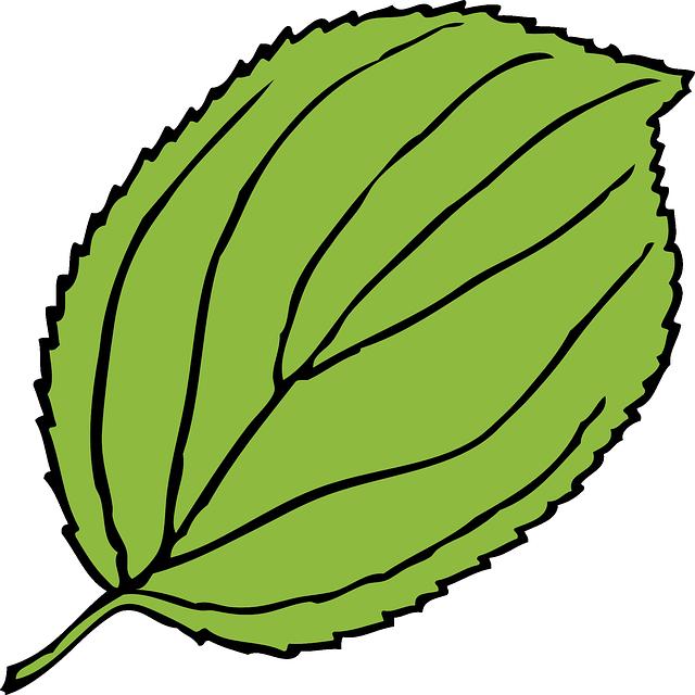 Sweet ideas jungle leaves. Ivy clipart big leaf