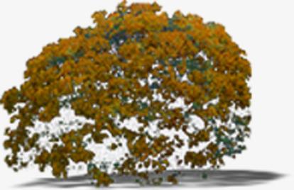 Bush clipart landscape. Brown tree texture effect