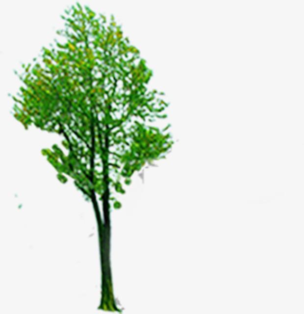 Bush clipart landscape. Poplar trees tree shrub