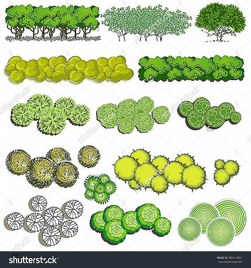 Design plant symbols lovely. Bush clipart landscape