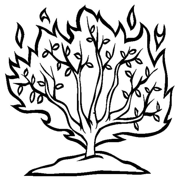 bushes clipart line drawing