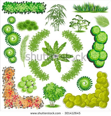 Bush clipart plan. Stock vector trees and