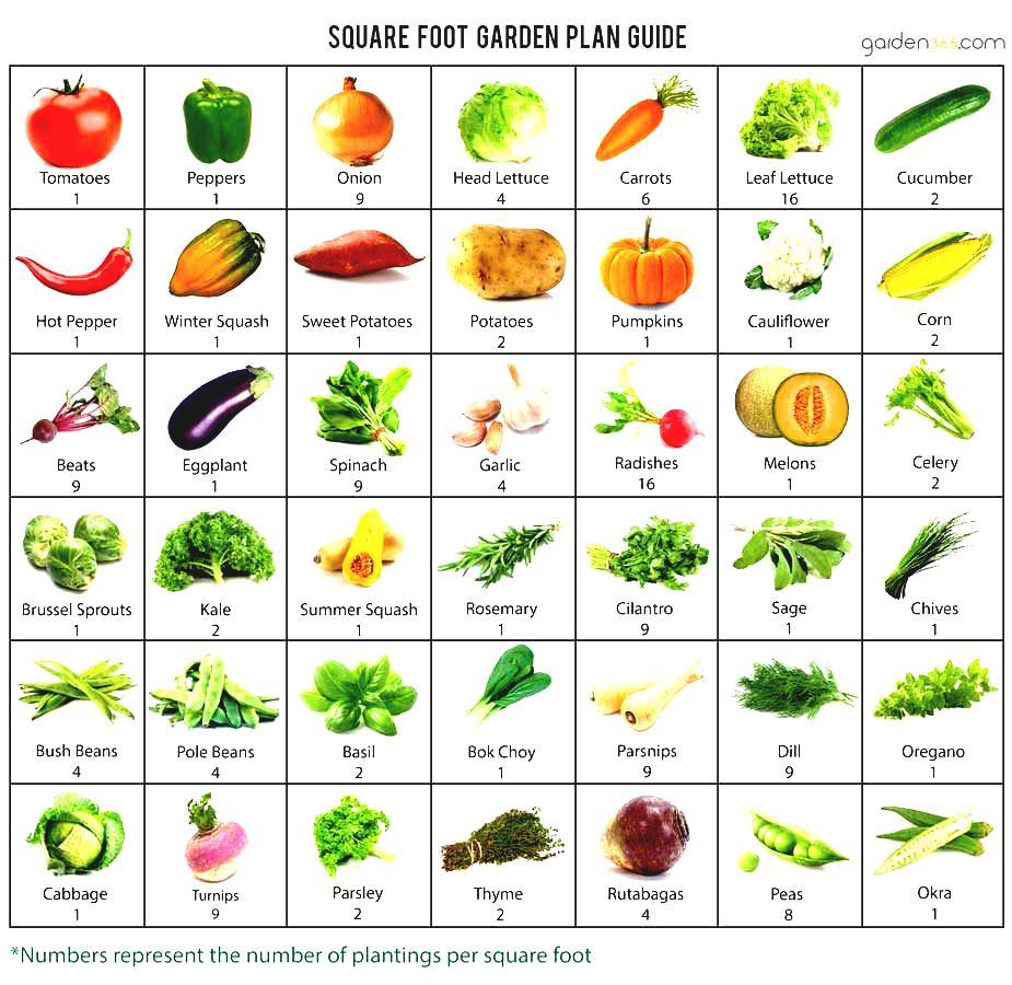 Bush clipart plan. Square foot garden grid