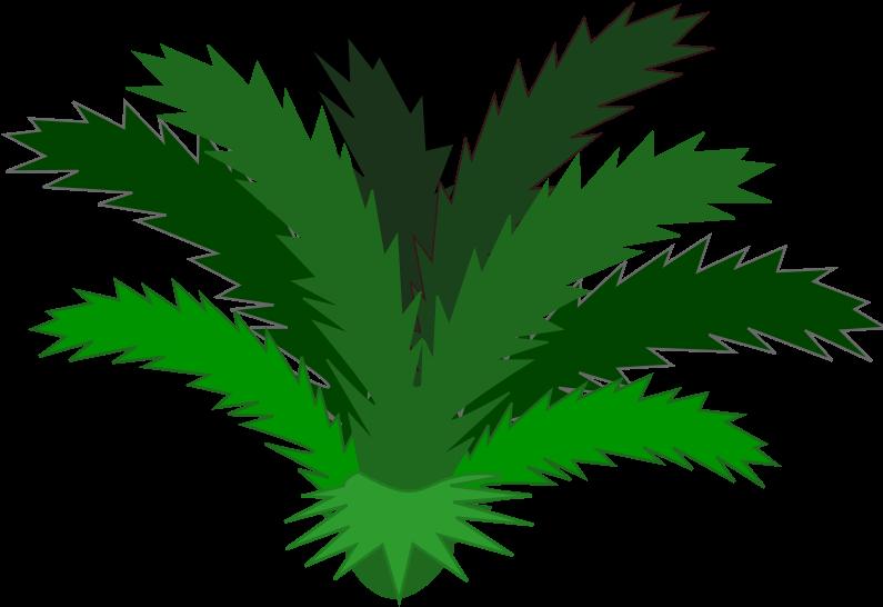 Bush clipart plant. Hd bushes plan tropical