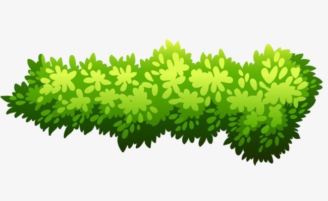 Bush clipart plant. Green shrub png image