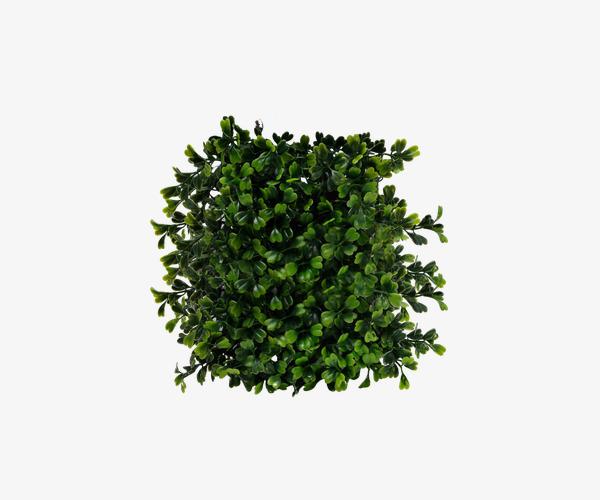 Bushes clipart shrub. Green bush plant png