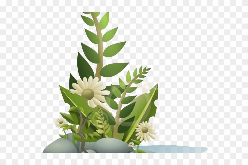 Bush clipart plant. Wild plants png transparent