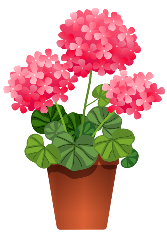 Poppy clipart potplant.  png potted flowers