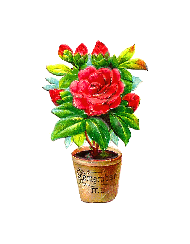 Poinsettias clipart hardik. Antique images free flower