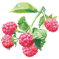 Download free png photo. Bushes clipart raspberry