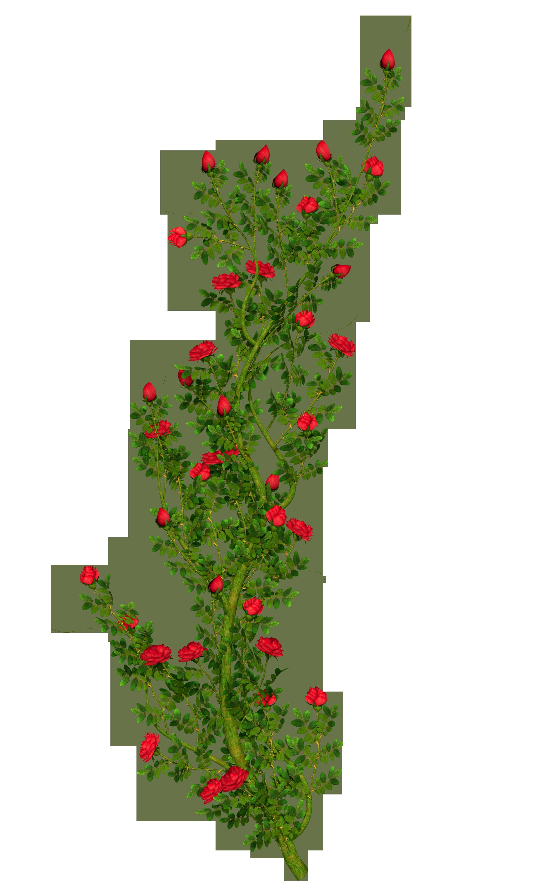 Rose clipart shrub. Rosebush gallery yopriceville high