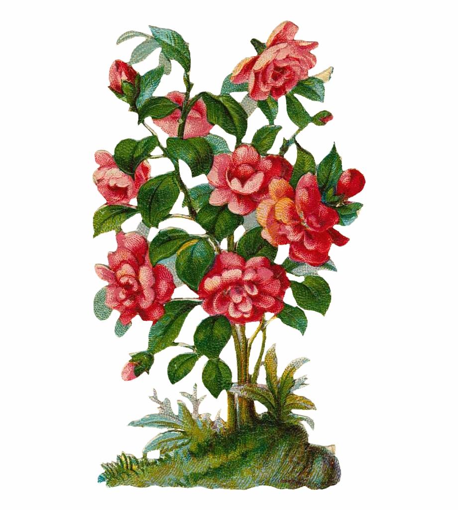 Floral flower tree png. Clipart rose rose bush